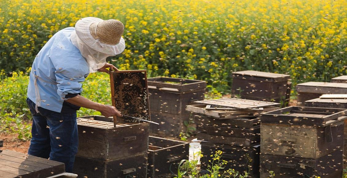 شغل زنبورداری