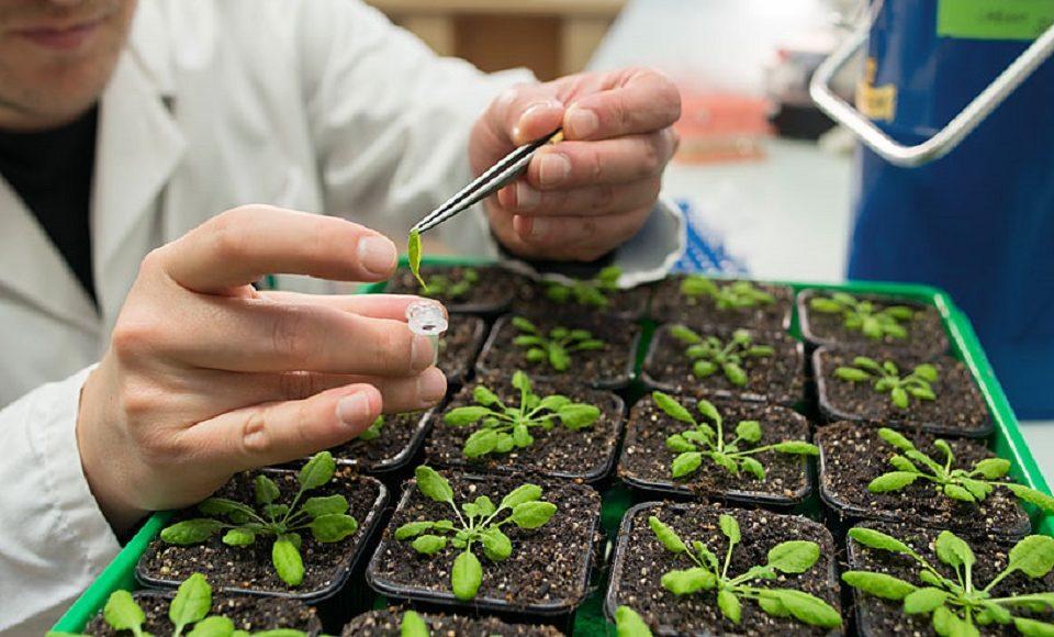شغل کارشناسی گیاه پزشکی